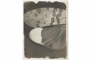 Микрофотография. Крылья бабочки. 1839–1840. Калотипия. Солёная бумага, негатив. Национальный музей науки и медиа, Брэдфорд, Великобритания © Science & Society Picture Library