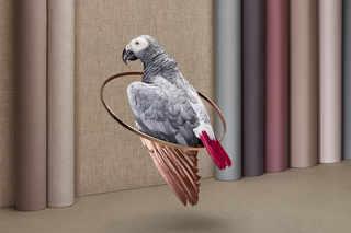 Birduals by Paloma Rincon