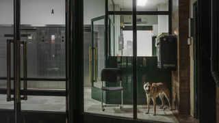2 место. Remy Soubanere (Франция) – The Watchdog